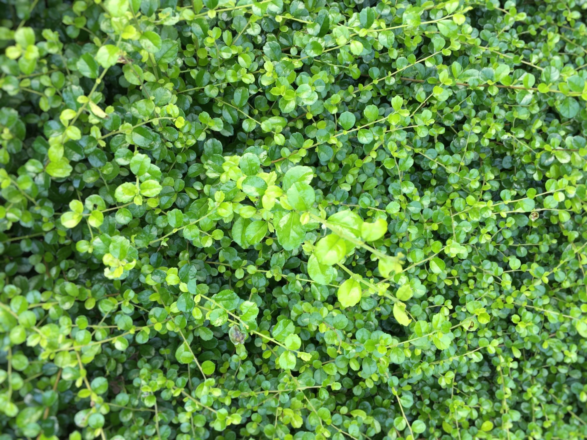 緑が綺麗な可愛い草