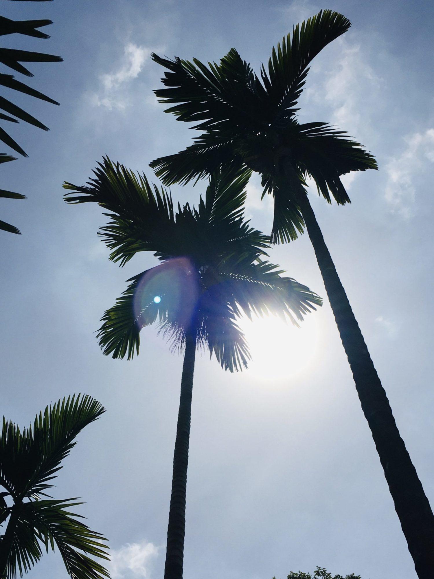 シンガポール夕日と椰子の木