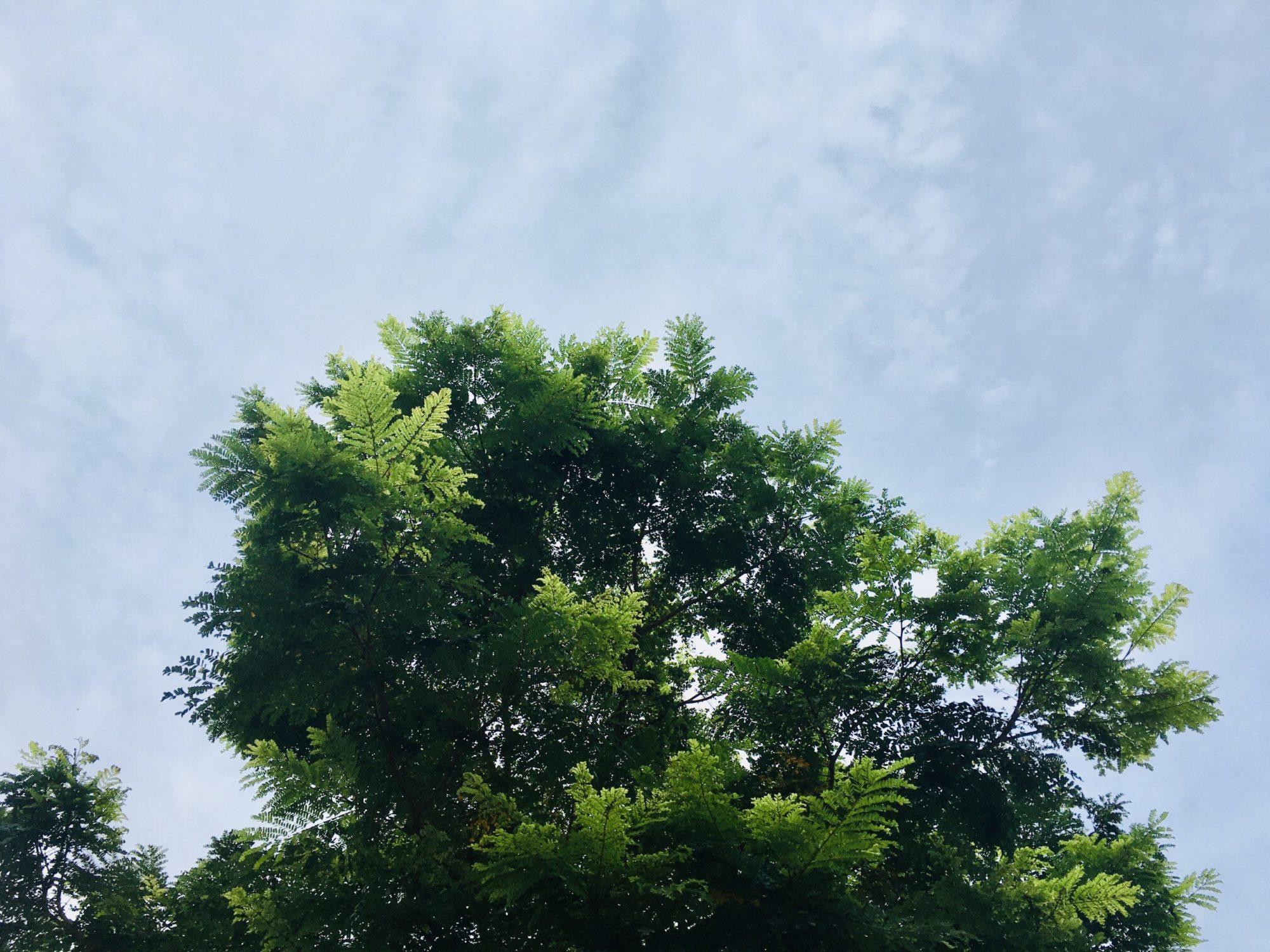 シンガポールの木と空